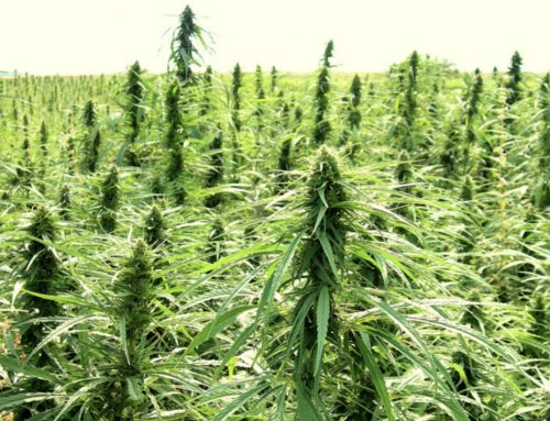 Takeaways from Tallahassee — Hemp on horizon?